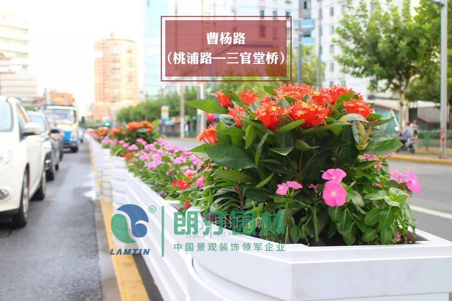 普陀區 曹楊路(桃浦路-三官堂橋段)弧形馬槽道路綠化花箱效果圖