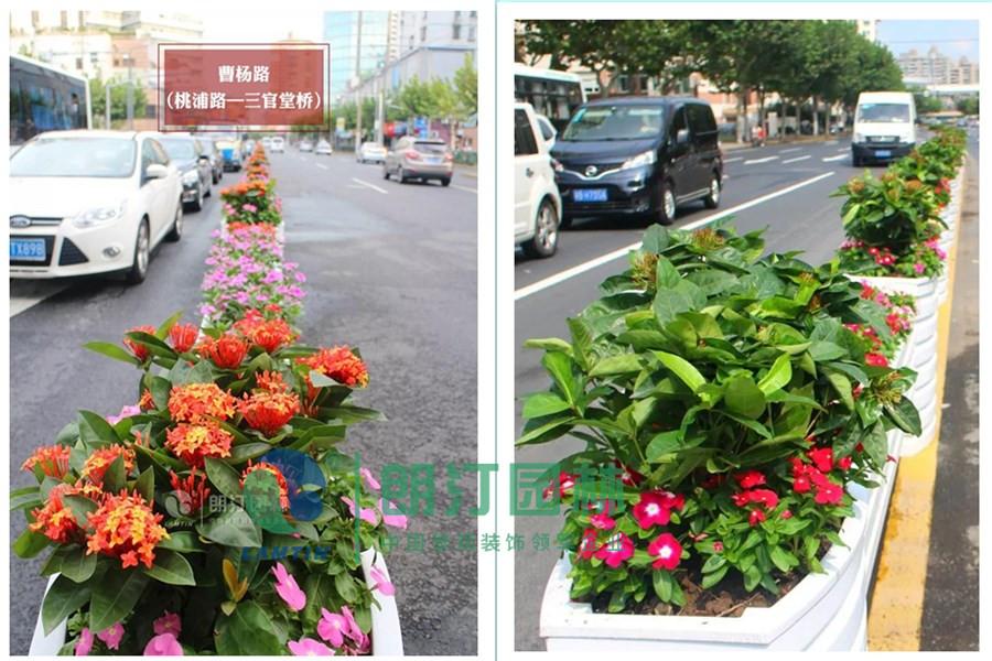 上海市道路景觀綠化提升